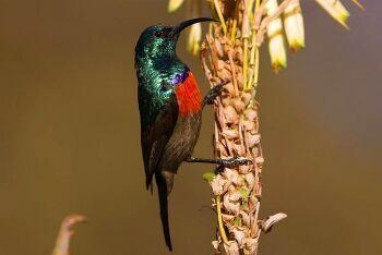 Walter Sisulu National Botanical Garden, Witwatersrand National Botanical Garden, Gauteng