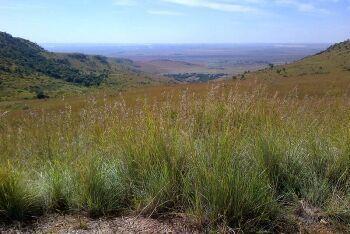 Suikerbosrand Nature Reserve, Gauteng