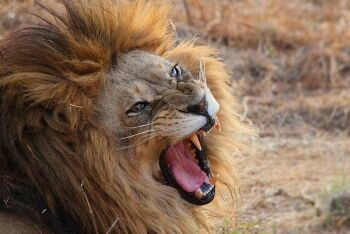 Lion park, Johannesburg, Gauteng